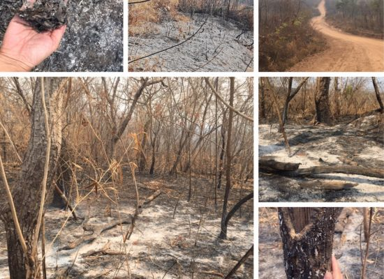 The Burnt forest
